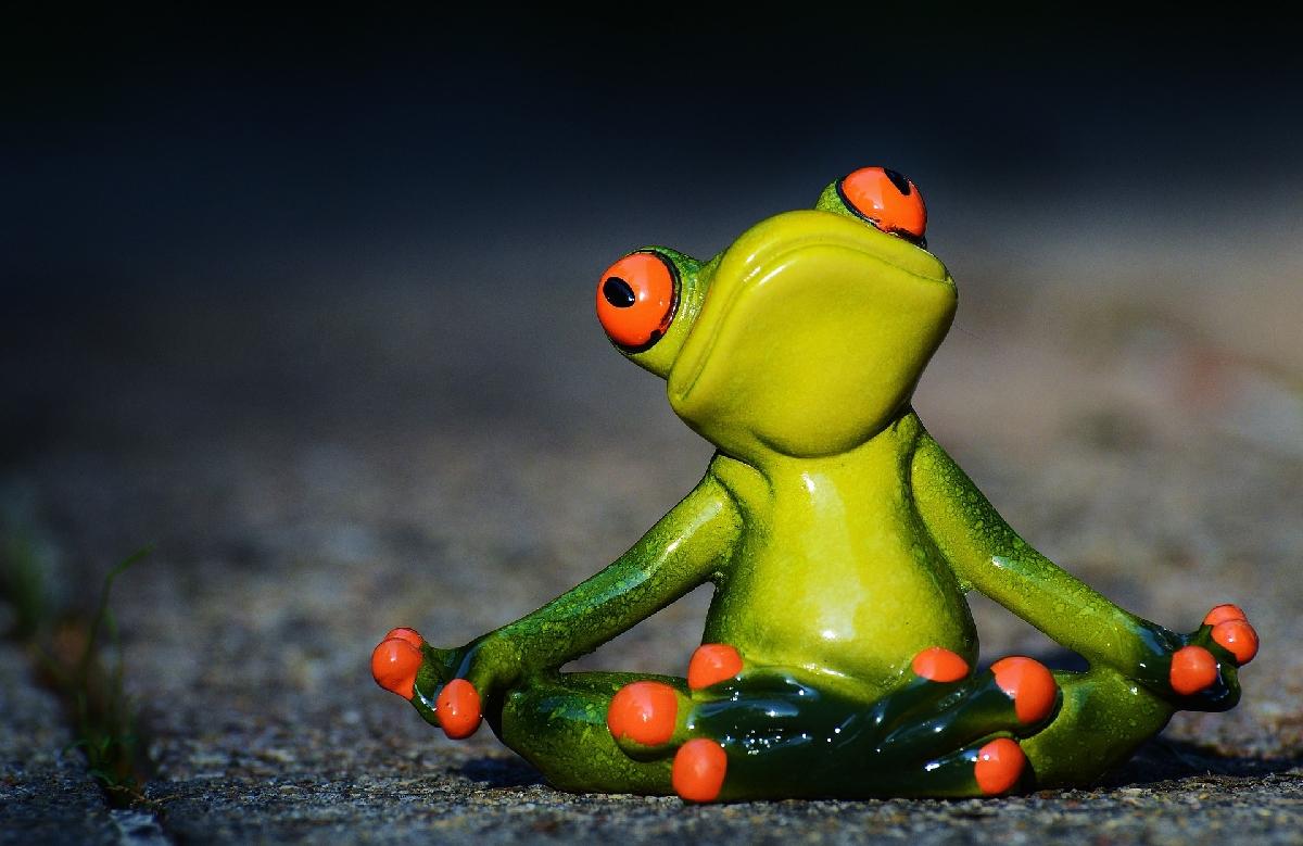 Wohlfühlen. Auch als Frosch