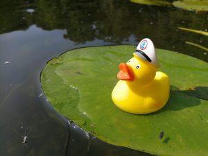 Duck der Liebe