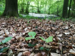 Wandern und Wundern - Breathe and Move